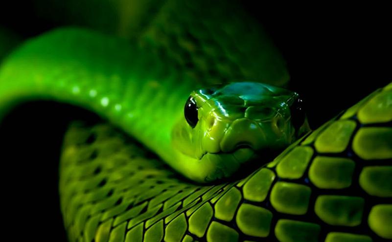 гороскоп змея