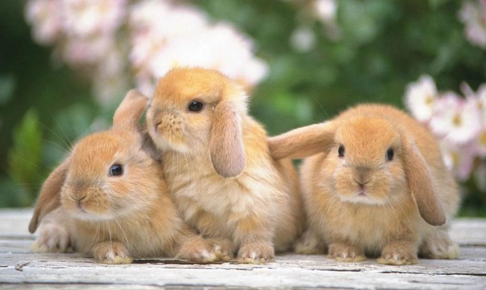 кролик гороскоп